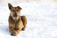 Primer del animal doméstico del perro amarillo en la nieve blanca al aire libre Imagenes de archivo