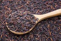 Primer del arroz negro Fotos de archivo
