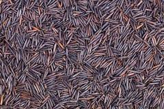 Primer del arroz salvaje Fotografía de archivo