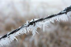 Primer del barbwire congelado Fotos de archivo libres de regalías