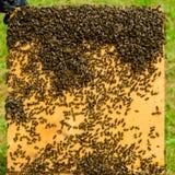 Primer del bastidor con las abejas Imágenes de archivo libres de regalías