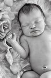 Primer del bebé recién nacido que duerme al lado de rosas en blanco y negro Foto de archivo libre de regalías