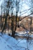 Primer del bosque del invierno Fotos de archivo