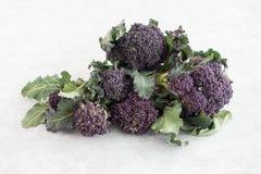 Primer del bróculi de brote púrpura Fotografía de archivo libre de regalías