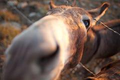 Primer del burro Imagen de archivo