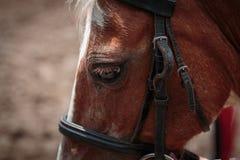 Primer del caballo Fotografía de archivo libre de regalías
