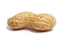Primer del cacahuete Fotografía de archivo libre de regalías