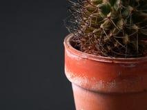 Primer del cactus Imágenes de archivo libres de regalías