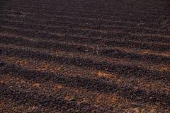 Primer del campo del aire que seca los granos de café foto de archivo
