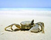 Primer del cangrejo Foto de archivo libre de regalías