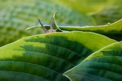 Primer del caracol en la hoja verde imagenes de archivo