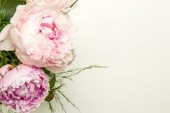 Primer del centro de flores de las peonías en el fondo blanco Foto de archivo libre de regalías
