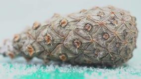 Primer del cono del cedro en el fondo aislado blanco Forma cónica del pinecone conífero no maduro cerrado perfecta para almacen de video