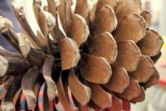 Primer del cono del pino Foto de archivo