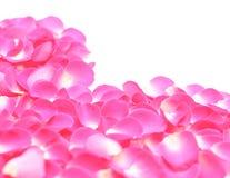 Primer del corazón de los pétalos del rosa de Rose Fotografía de archivo