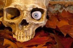 Primer del cráneo Fotografía de archivo libre de regalías
