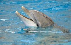 Primer del delfín Imagenes de archivo