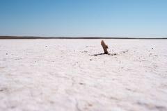 Primer del desierto de la sal fotos de archivo libres de regalías