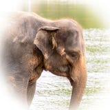 Primer del elefante asiático de la cabeza imágenes de archivo libres de regalías