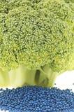 Primer del florete del bróculi y de su germen Foto de archivo libre de regalías
