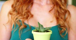 Primer del florista de sexo femenino que sostiene la planta en conserva metrajes