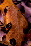 Primer del follaje de otoño complejo hermoso. Foto de archivo libre de regalías