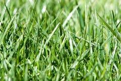 Primer del fondo de la hierba verde Imágenes de archivo libres de regalías