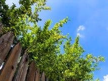 Primer del fondo de madera de la cerca del roble simple vertical en fondo del cielo imagen de archivo libre de regalías