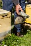 Primer del fumador de la abeja en colmena en la granja Imagenes de archivo