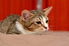 Primer del gatito Fotografía de archivo