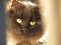 Primer del gato imágenes de archivo libres de regalías