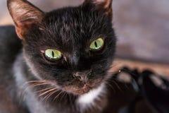 Primer del gato Foto de archivo