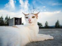 Primer del gato blanco en el tejado y la naturaleza imagenes de archivo