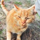 Primer del gato Mano que frota ligeramente un gato imagenes de archivo