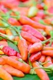 Primer del grupo fresco colorido de las pimientas Imagen de archivo libre de regalías