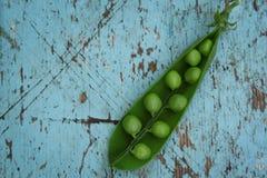 Primer del guisante verde fresco en fondo de madera azul fotografía de archivo libre de regalías