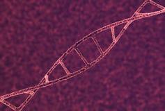 Primer del hilo de la DNA Foto de archivo