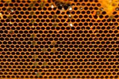 Primer del hogar de la abeja del panal Foto de archivo