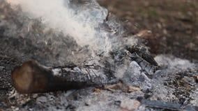 Primer del humo blanco hermoso de una hoguera almacen de metraje de vídeo