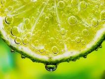 Primer del limón Foto de archivo libre de regalías