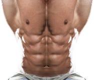 Primer del músculo abdominal en el fondo blanco Fotos de archivo