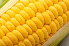 Primer del maíz Foto de archivo libre de regalías