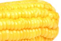 Primer del maíz Fotos de archivo
