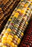 Primer del maíz indio Fotografía de archivo