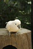 Primer del Macaw Imagen de archivo libre de regalías