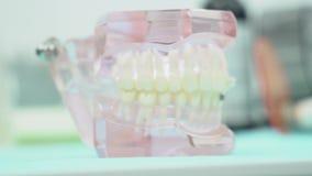 Primer del mandíbula de la dentadura media La dentadura de mandíbulas con los dientes con las gomas transparentes se coloca en la almacen de video