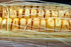 Primer del maíz Foto de archivo