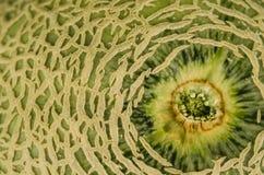 Primer del melón del cantalupo Fotografía de archivo libre de regalías