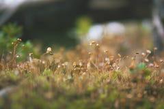 Primer del musgo verde en Autumn Forest Fotos de archivo libres de regalías