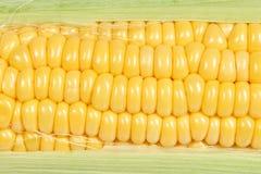 Primer del oído del maíz Imágenes de archivo libres de regalías
